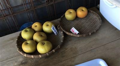 来援する時期により梨の種類が変わります